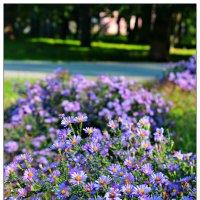 Осень-красивая пора :: Юлия Тарасенко