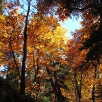 Золотая осень в Домбае :: Светлана Красильникова