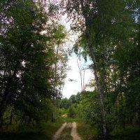 Лесная дорога :: Наталия Зёма