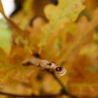 Осенний дуб :: Andy Bayt