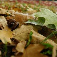 Осенний лист :: Andy Bayt