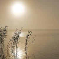 Туман. :: Виктор