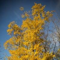 Осень в красках :: Сахаров Александр