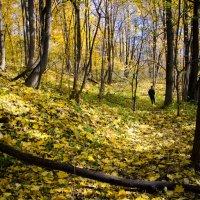 Золотая осень :: Евгения Ж