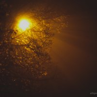 ночное солнце :: Olesia Kasabova