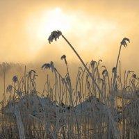 Солнце в тумане над болотом :: максим лыков