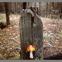 В лесу... :: Александр Копалов