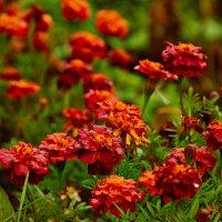 Цветы :: Антон Бородулин