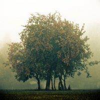 Дерево :: Stanislav Baynov