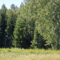 Омский лес. :: Раечка ---