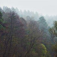 Осенние туманы :: Сергей Дубинин