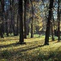 Последнии дни золотой осени :: Наталья Воинова