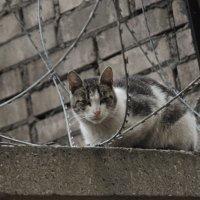 Птицы в клетке, звери в клетке, а на воле воронье, Это - плач по малолетке, это - прошлое мое. :: Юрий Вовк