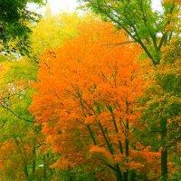 осень :: алексей сергиенко