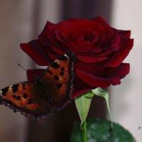 Роза :: Life under the Sky