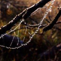 ожерелье из капель росы :: Yan .