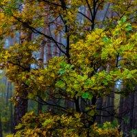 Осенний лес :: Владсилав Матвиенко
