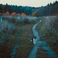 на охоту :: Olga Firsova