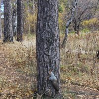 Магнитик на дереве :: Mags Khalyapov