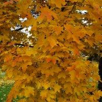 Осенний клён :: Andy Bayt
