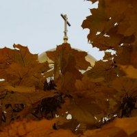 Золотая осень. :: Andy Bayt