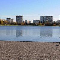 Гольяновский пруд :: Елена Попова