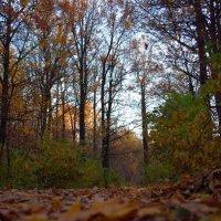 Осень :: Елизавета Зуева