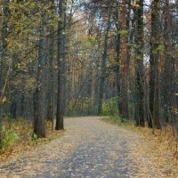 Дорога в лесу :: Елизавета Зуева