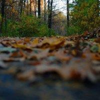 Осень в парке :: Елизавета Зуева