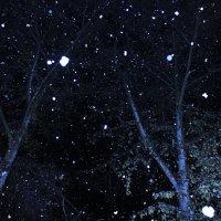 Первый снег :: Павел Каморных