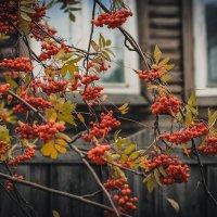 Осень. :: Марина Матвеева