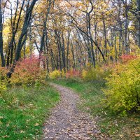 В лесу.. :: Юрий Стародубцев