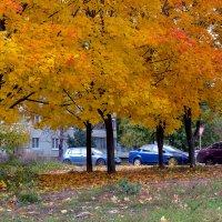 Осень на улице :: Юрий Стародубцев