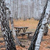 Осенний лес :: Александр Яценко