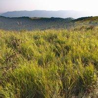 Горные травы :: Анна Титова