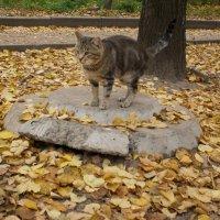 Я - памятник себе... :: Наталья Тимошенко