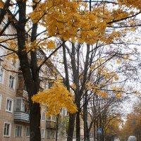 Осенние перспективы - 3 :: Наталья Тимошенко