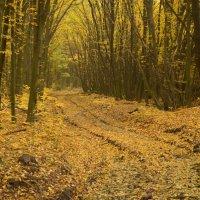 Осень :: Дмитрий Глушенюк
