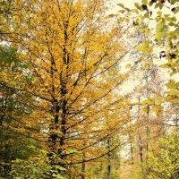 осень.. :: Дарина Нагорна