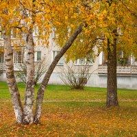осень в разгаре :: Диана Матисоне
