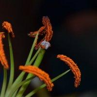Цветок в ночи :: Денис Снитко