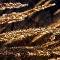 Золотой ветер :: Serge Golos