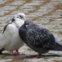 Они друг друга понимают с полувзгляда... :: Ольга