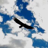 я птица свободы :: андрей громов