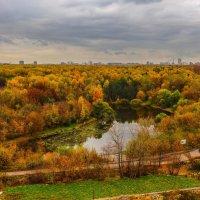 Золотая осень в пасмурное время :: Valery Zhadan