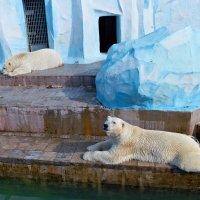 Зоопарк :: Антон Банков