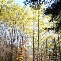 Осенними тропами Домбая :: Светлана Попова