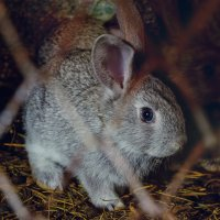 Братец кролик :: Viela ^_^