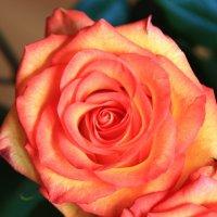 Папины цветы :: Анна Уварова