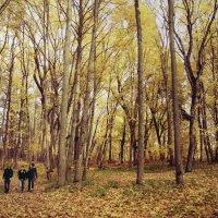 осень 4 :: Арсений Куликов